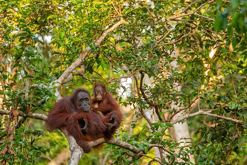 Borneo & Malaysia