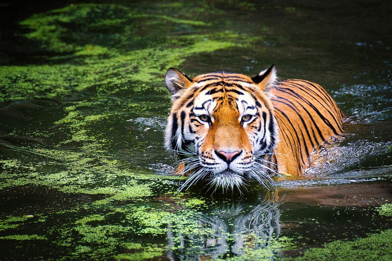 Wildlife & Safari Tours