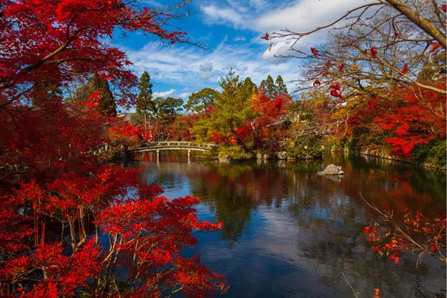 Japan Tour: Splendours of Japan