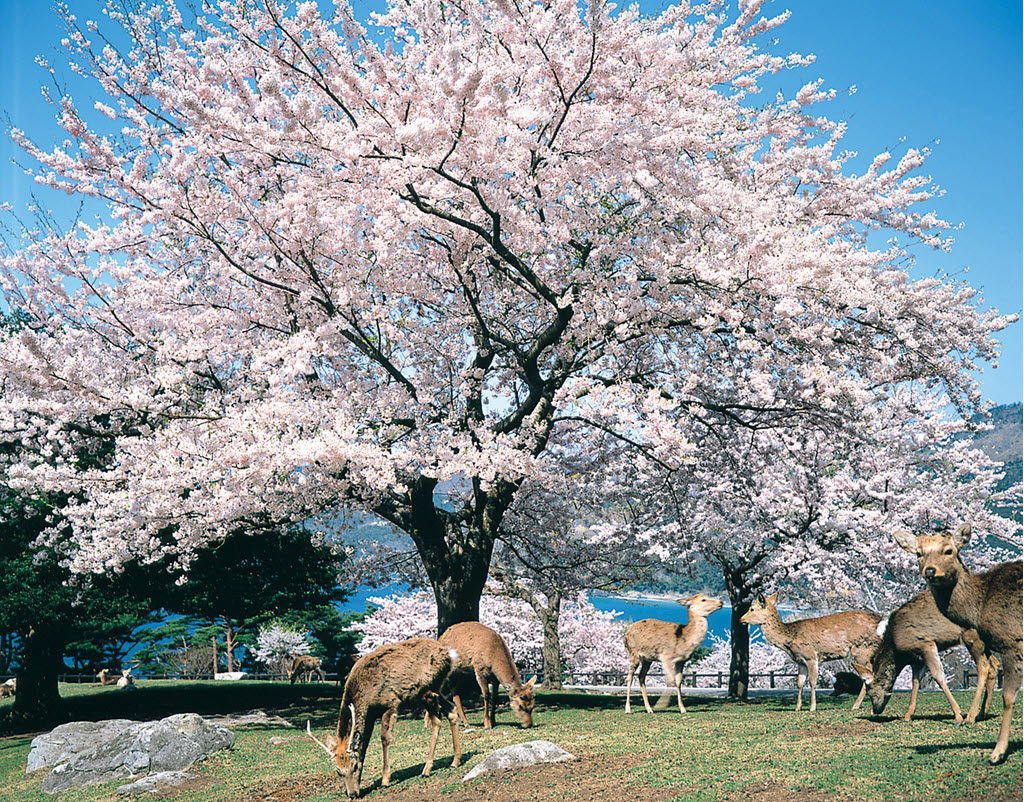Japan At A Glance Independent Tour (for pre or post ocean cruise)
