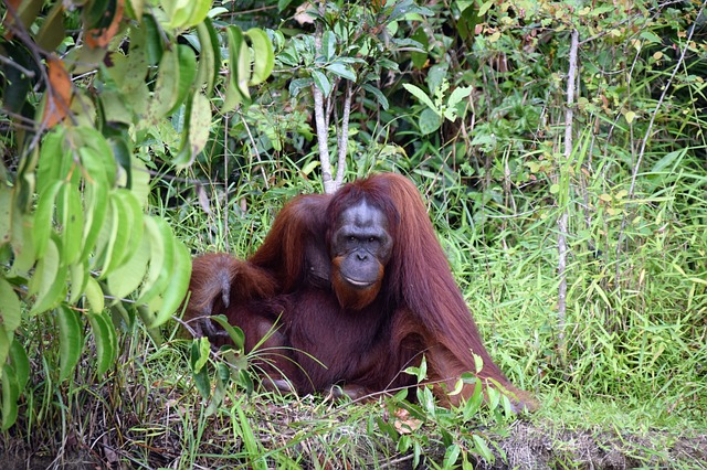 BORNEO WILDERNESS AND WILDLIFE SCHOOL TOUR